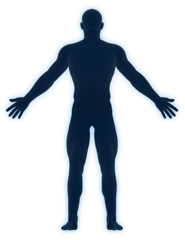 Back diagram of human.